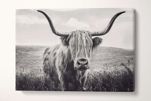 long haired cattle black and white wall decor