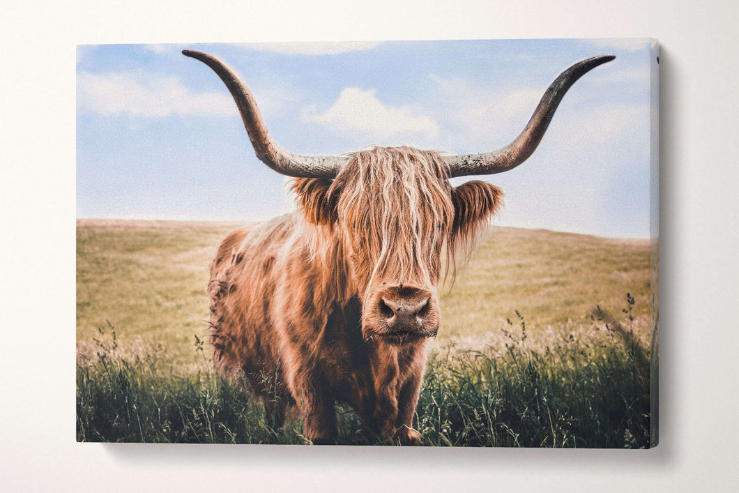 long haired cattle print
