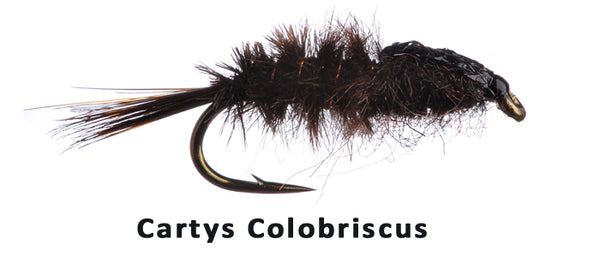 Cartys Colobriscus #14 - Flytackle NZ