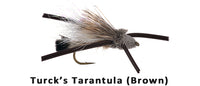 Turck's Tarantula (brown) - Flytackle NZ