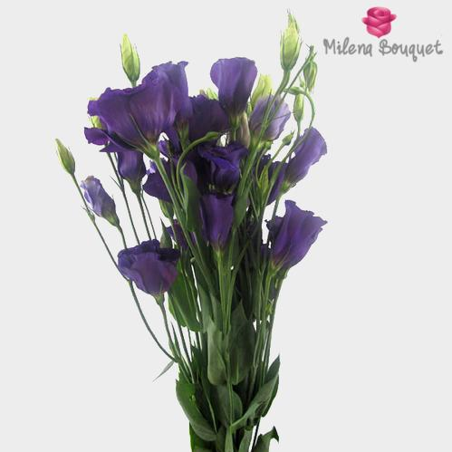 Purple Lisianthus Flowers - by the bunch - Milena Bouquet