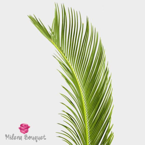 Sago Palm Greens - Milena Bouquet