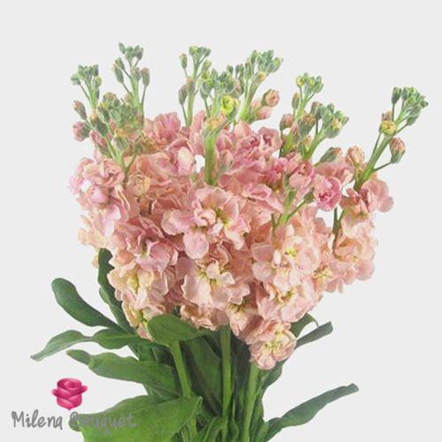 Stock Pink Flowers - Milena Bouquet