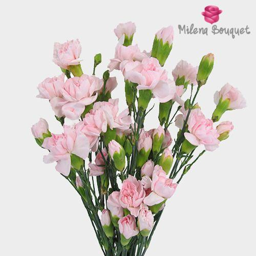 Mini Carnations Pink Flowers - Milena Bouquet