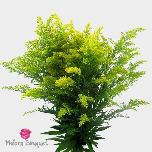 Golden Solidago - Milena Bouquet