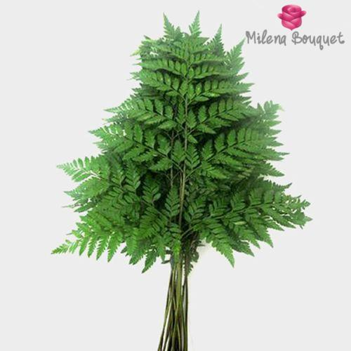 Leather Leaf Fern Bulk - Milena Bouquet