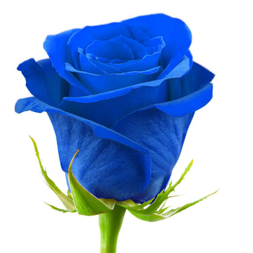 Classic Blue Rose Bouquet - 50 Stems - blue, blue roses, Flowers & Greens - Milena Bouquet