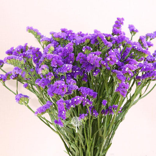 Statice Blue Purple Color Limonium Sinuatum Flower - Milena Bouquet