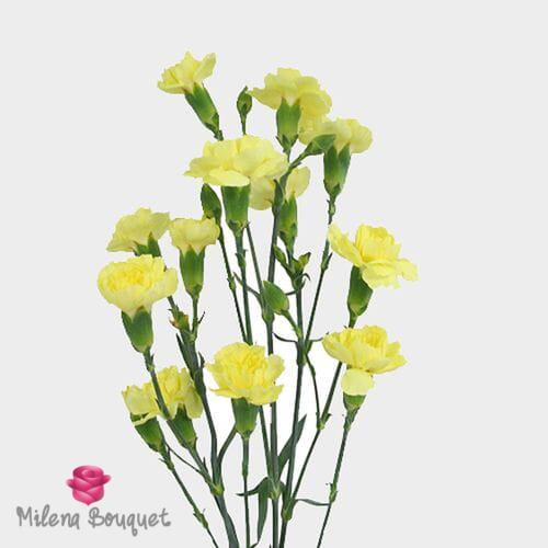 Yellow Mini Carnation Flowers - Milena Bouquet