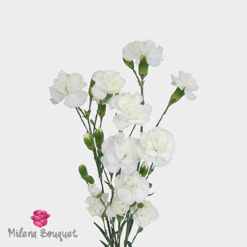 White Mini Carnations Flowers - Milena Bouquet