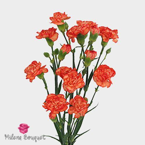Orange Mini Carnation Flowers - Milena Bouquet