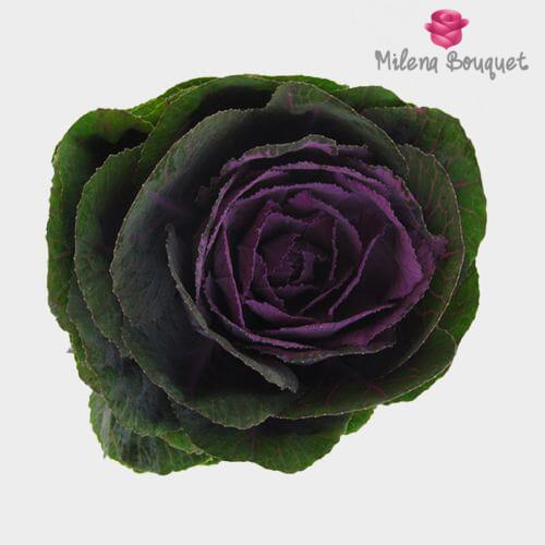 Kale Purple - Milena Bouquet