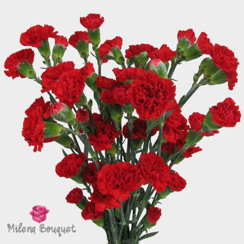 Red Mini Carnation Flowers - Milena Bouquet