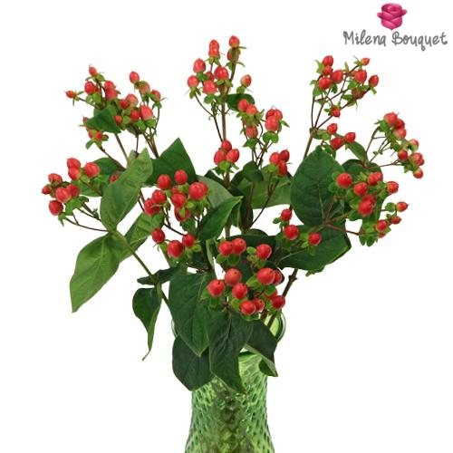 Red Hypericum Berries Flower - Milena Bouquet