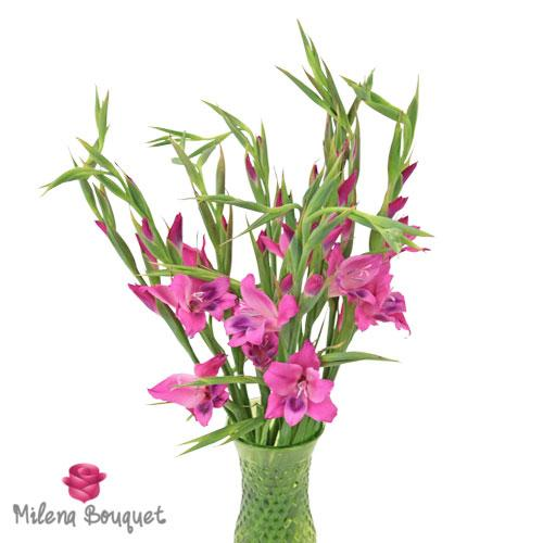 Pink Splash Mini Gladiolus Flowers - Milena Bouquet