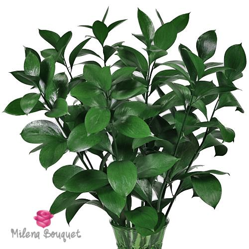 Ruscus Greenery - Milena Bouquet