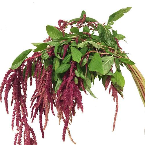Amaranthus Hanging Red - 15 Stems - Milena Bouquet
