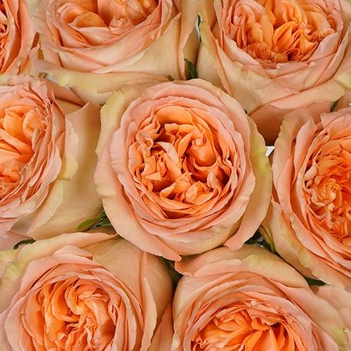 Country Home Garden Rose - Milena Bouquet