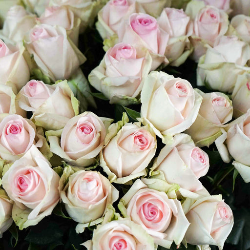 Wholesale Bulk Fresh Cut Roses 75 Long Stems | Premium Ecuadorian Roses - Milena Bouquet