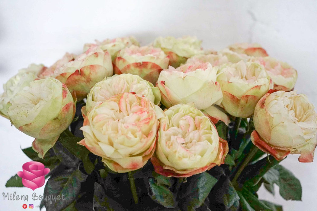 Wholesale Bulk Fresh Cut Roses 400 Long Stems | Premium Ecuadorian Roses