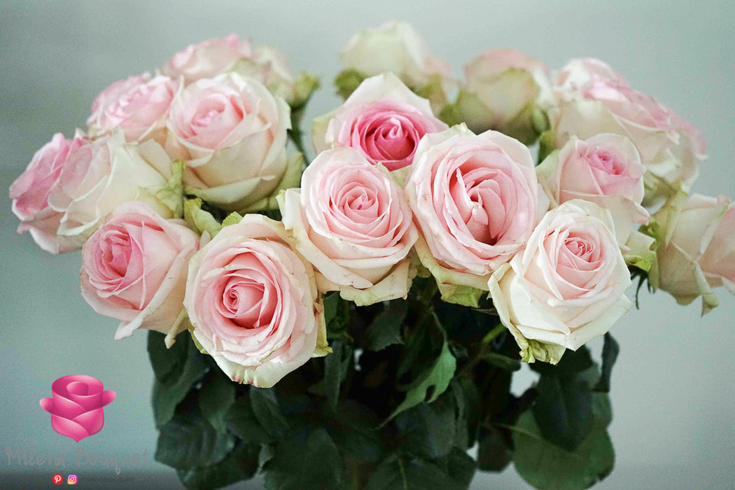 Wholesale Bulk Fresh Cut Roses 150 Long Stems | Premium Ecuadorian Roses - Milena Bouquet
