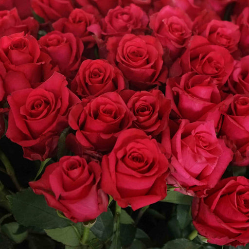 Wholesale Bulk Fresh Cut Roses 400 Long Stems | Premium Ecuadorian Roses - Milena Bouquet