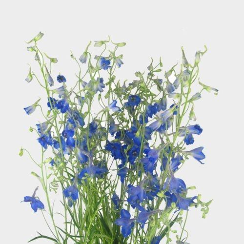 Delphinium Dark Blue Flower - Milena Bouquet