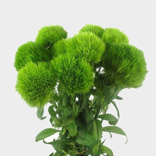 Green Dianthus Flowers - Milena Bouquet