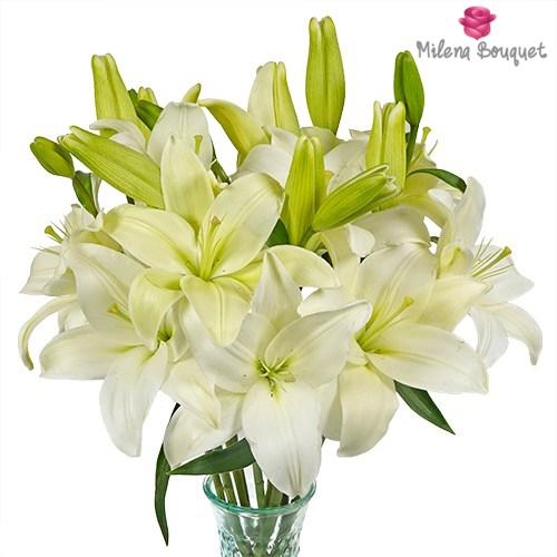 White Asiatic Lily - 15 Stems - Milena Bouquet
