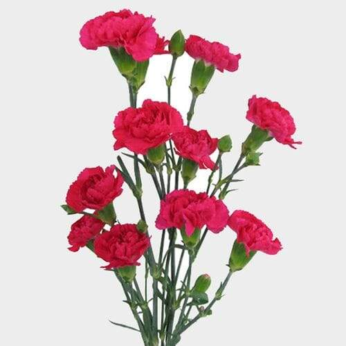 Hot Pink Mini Carnation Flower - Milena Bouquet
