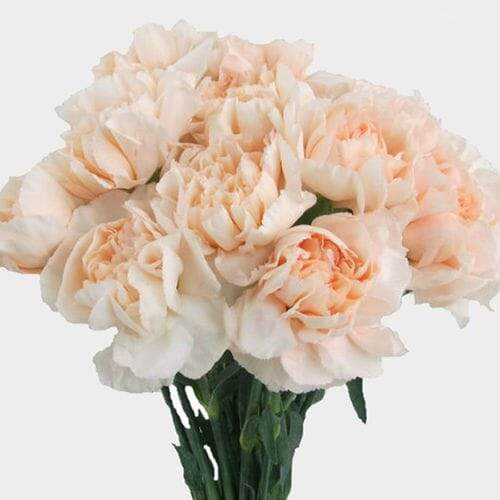 Peach Fancy Carnation Flowers - Milena Bouquet