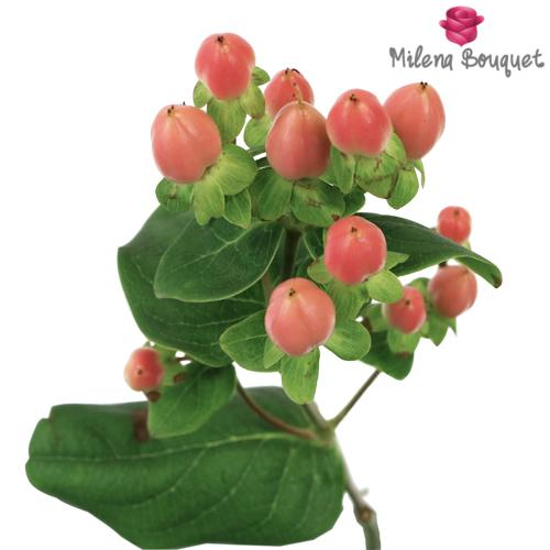 Peaches and Cream Hypericum Berries - Milena Bouquet