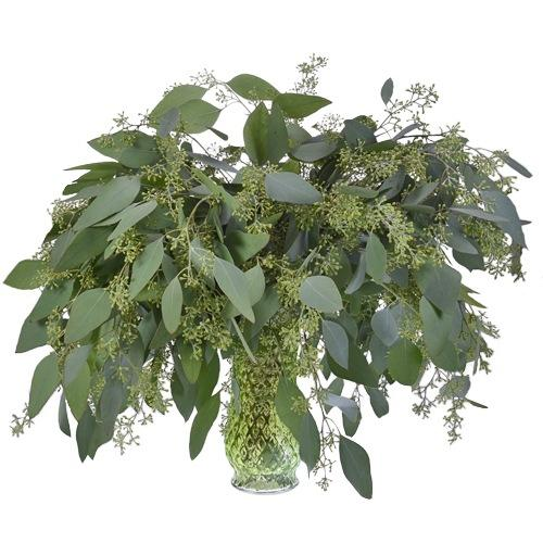 Seeded Eucalyptus Greenery - Milena Bouquet
