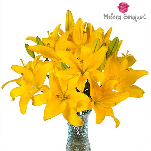 Yellow Asiatic Lily - 15 Stems - Milena Bouquet