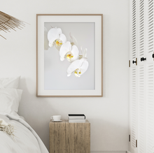 Load image into Gallery viewer, Phalenopsis Orchid Print - Addy & Lou