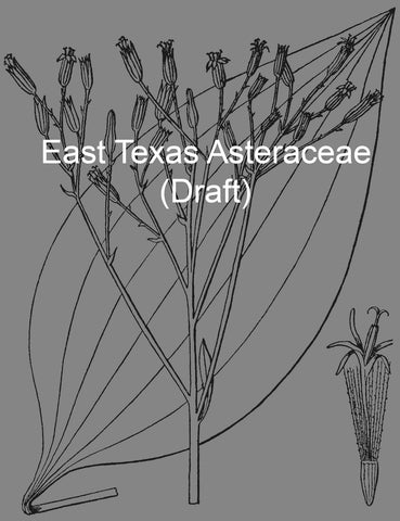 Asteraceae of East Texas (draft)