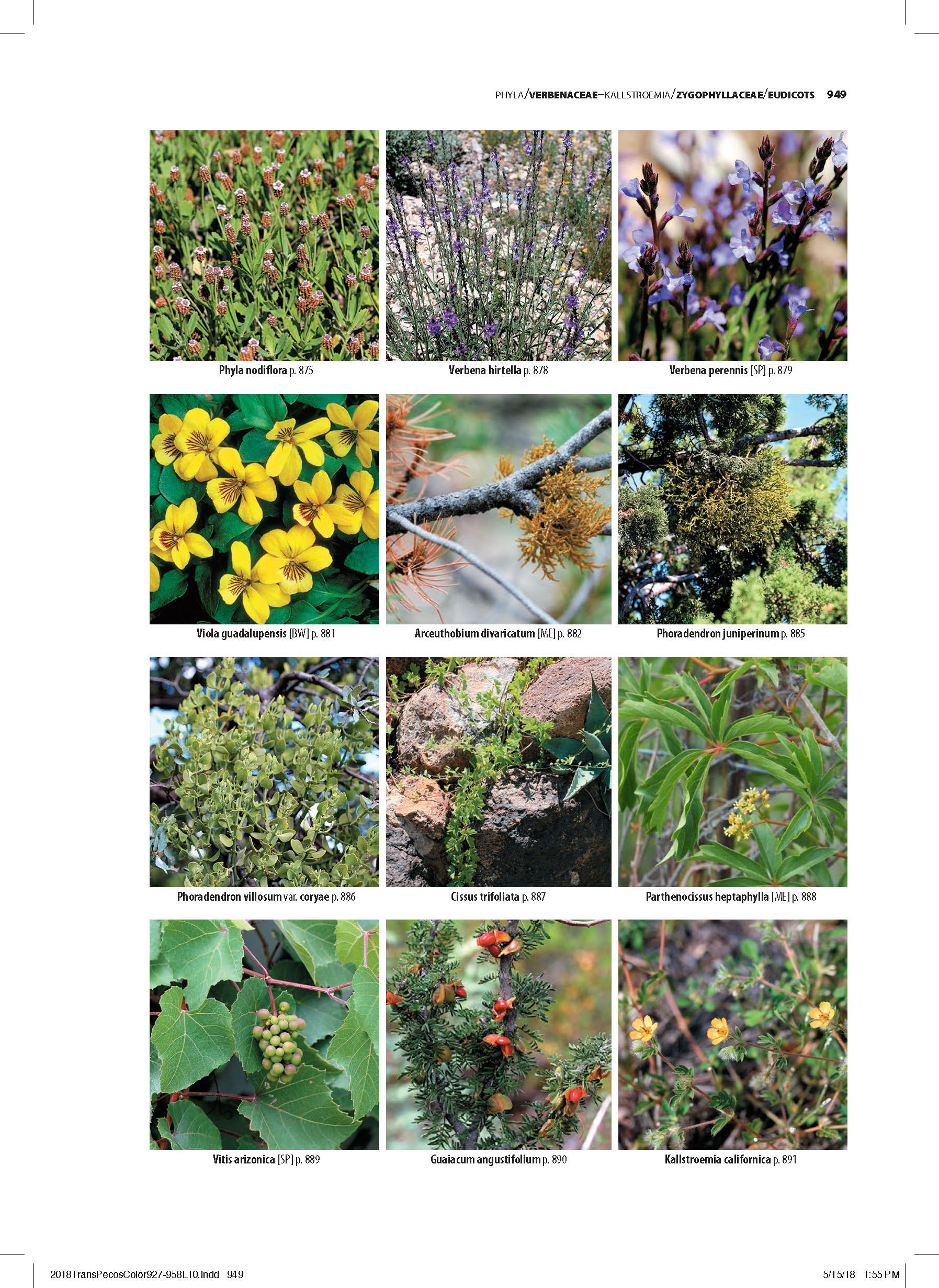 Flowering Plants Of Trans Pecos Texas And Adjacent Areas (Pre Order)