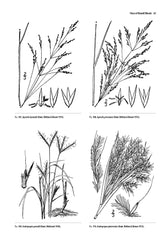 Guide to the Vascular Flora of Howell Woods