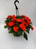 Load image into Gallery viewer, New Guinea Impatiens orange