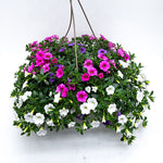 Load image into Gallery viewer, calibrachoa basket party favour