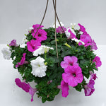 "Load image into Gallery viewer, 10"" Petunia Easy Wave Basket"