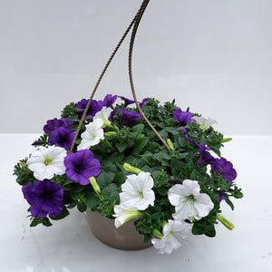 "10"" Petunia Easy Wave Basket"