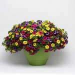 "Load image into Gallery viewer, 10"" Calibrachoa Patio Pot"