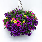 Load image into Gallery viewer, calibrachoa basket bold and gold