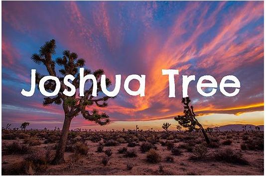 Insider's Guide To Joshua Tree!