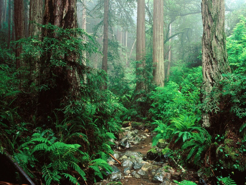 California Redwoods National Park