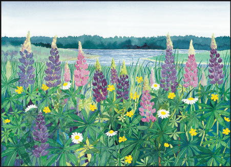 Cove Lupine Note