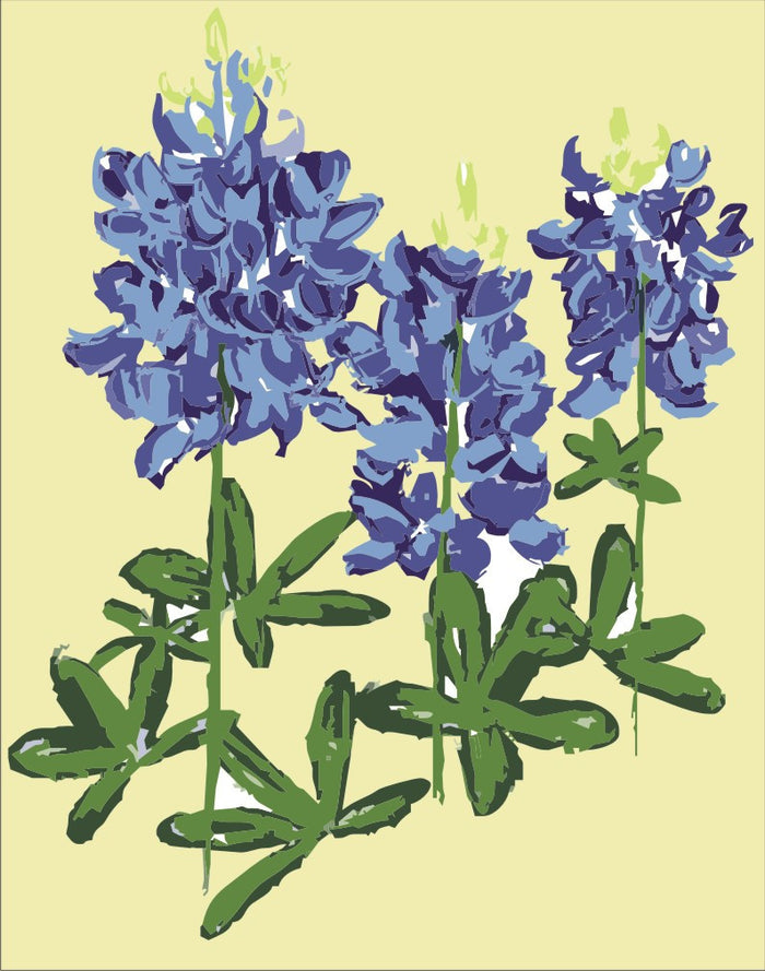 Bluebonnets (wholesale)