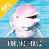 FULL DAY LUXURY BOAT TOUR TO KHANOM - WATCH PINK DOLPHINS - kohsamui.tours
