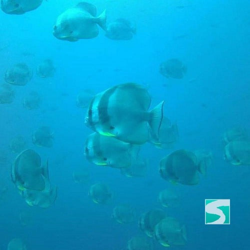 Koh Samui diving course - pool & open sea - kohsamui.tours